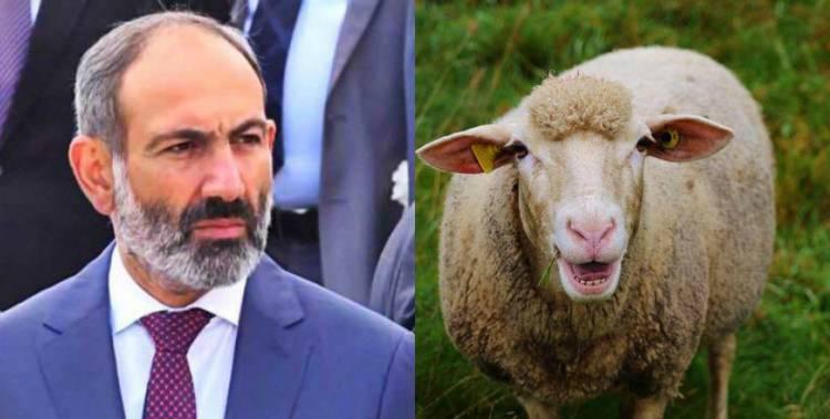 -Պարո՛ն վարչապետ,-մկկաց գառը